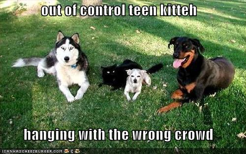 out of control teen kitteh hanging with the wrong crowd