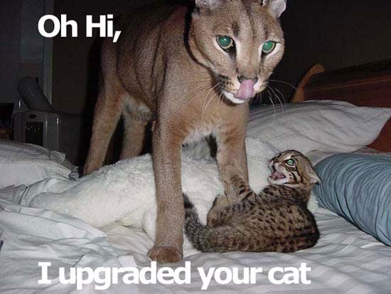 Oh Hi, I upgraded your cat