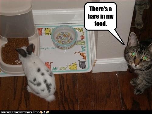 There's a hare in my food.