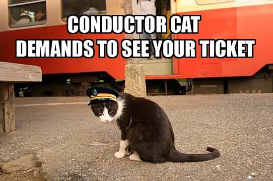 Conductor Cat demands to see your ticket