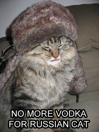 No more vodka for Russian Cat