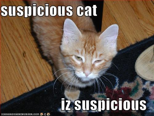 Suspicious cat iz suspicious