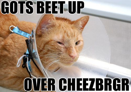 Gots beet up over cheezbrgr