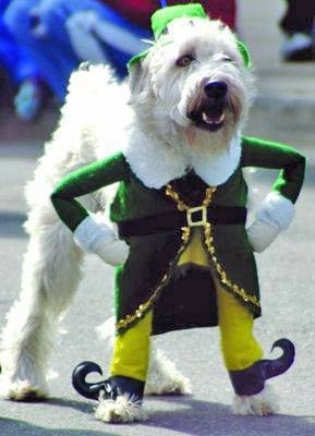 Dog wearing an elf costume