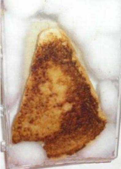 Virgin Mary on a grilled cheese sandwich.
