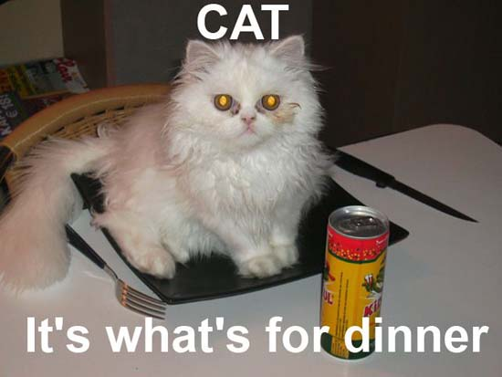 CAT / It's what's for dinner.