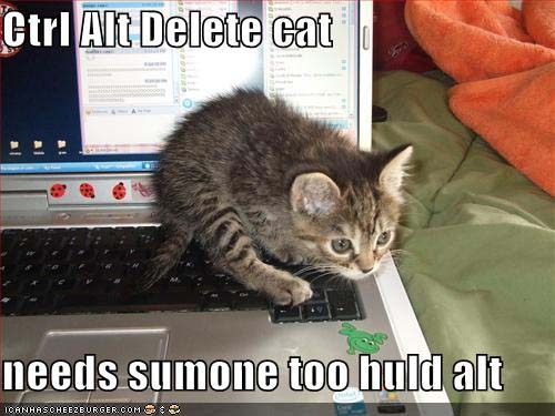 Ctrl Alt Delete Cat needs somone to huld alt