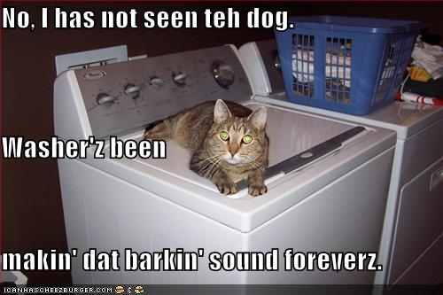 No, I has not seen teh dog. Washer'z been makin' dat barkin' sound foreverz.