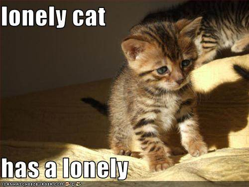 lonely cat has a lonely