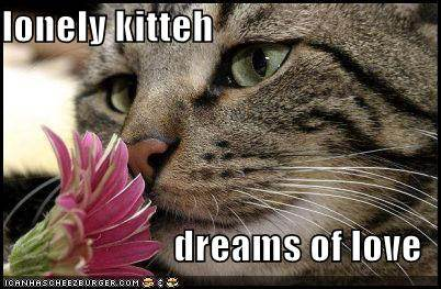 lonely kitteh dreams of love