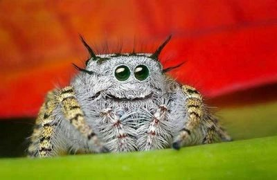 Spider with a smiley face
