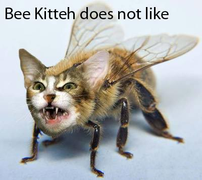 Bee Kitteh does not like