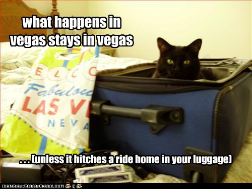 What happens in Vegas stays in Vegas... (unless it hitches a ride in your luggage)