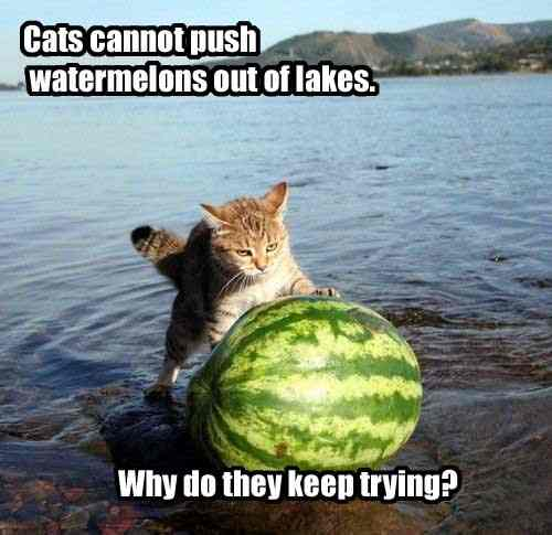 Cats cannot push watermelons out of lakes. Why do they keep trying?