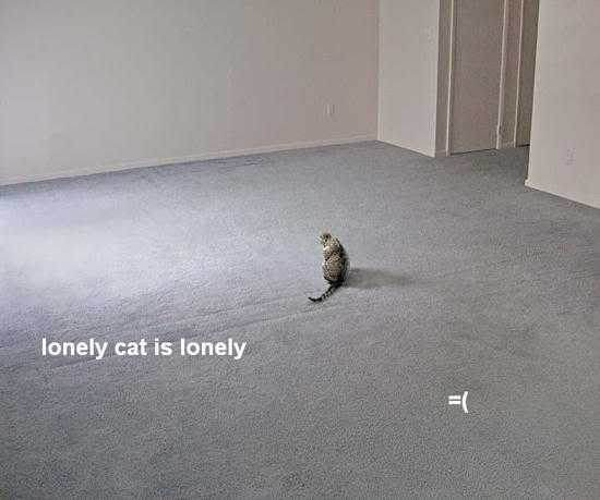lonely cat is lonely =(