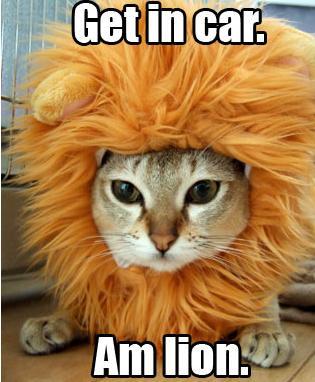 Get in car. Am lion.