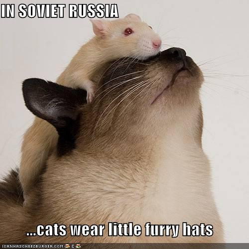 In Soviet Russia ...cats wear little furry hats