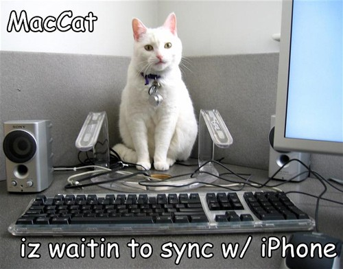 MacCat iz waitin to sync w/ iPhone