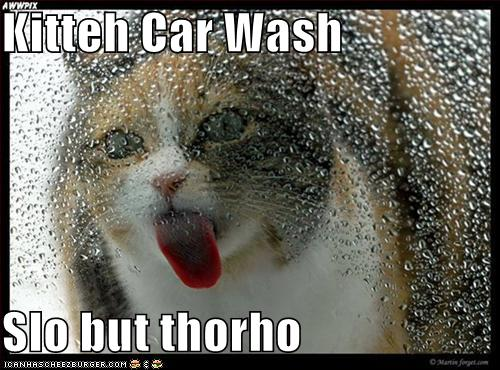 Kitteh Car Wash  Slo but thorho