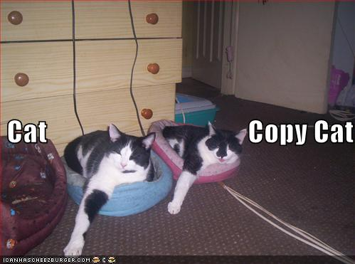Cat / Copy cat