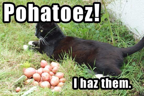 Pohatoez! I haz them.