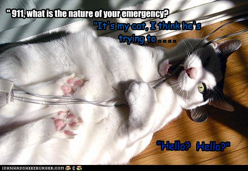 """911, what is the nature of your emergency? ""It's my cat, I think he's trying to... ""Hello? Hello?"""