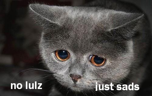 no lulz just sads