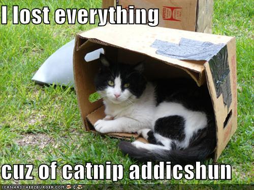 I lost everything cuz of catnip addicshun