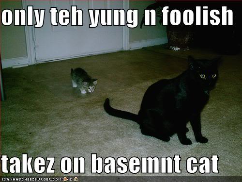 only teh yung n foolish takez on basement cat