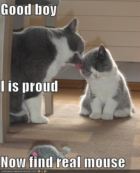 Good boy I is proud Now find real mouse