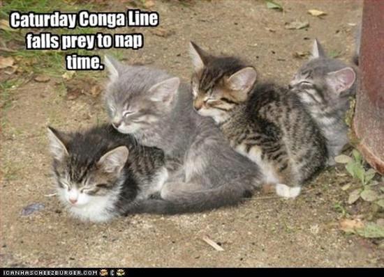 Caturday Conga Line falls prey to nap time