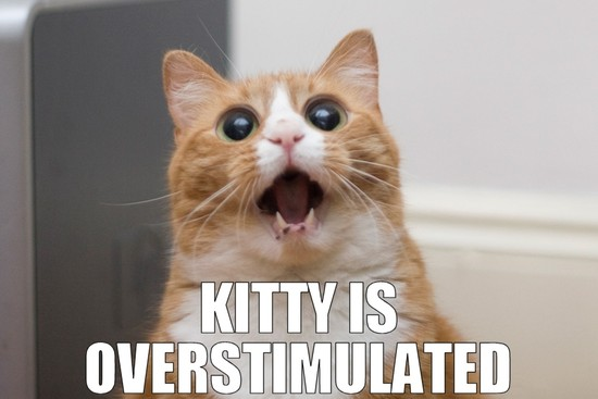 Kitty is overstimulated