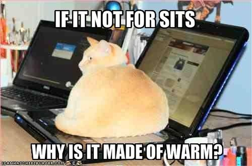 Id it not for sits why is it made of warm?