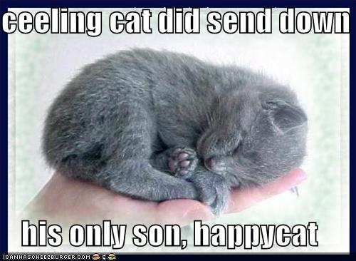 Ceeling cat did send down his only son, happycat