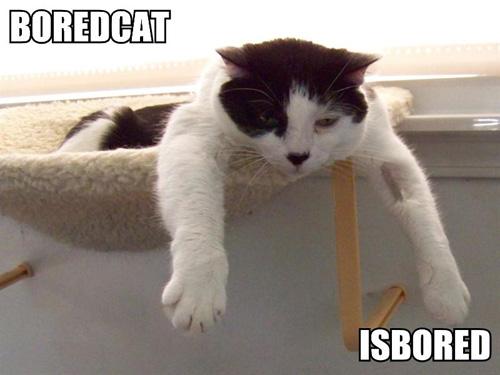 Boredcat isbored