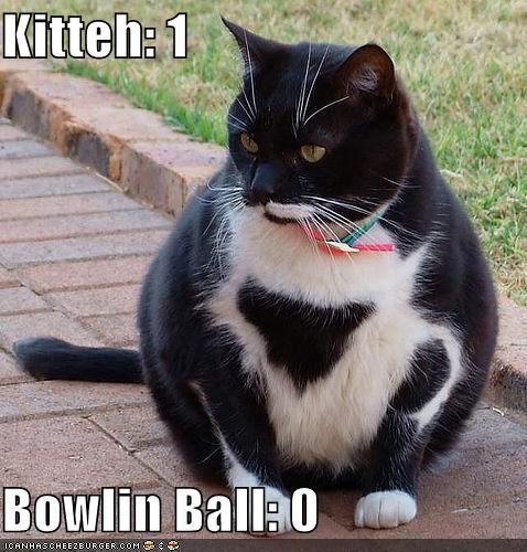 Kitteh: 1 / Bowlin Ball: 0