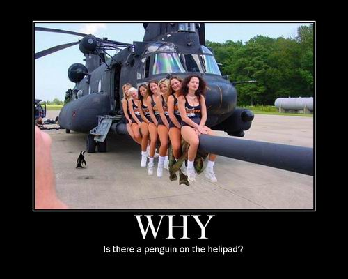 Why / is there a penguin on the helipad?